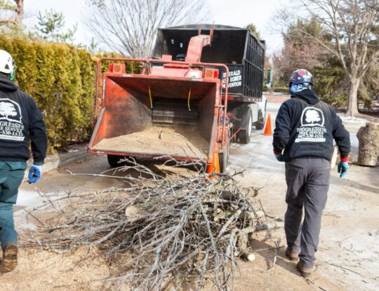 Commercial Tree Services-Greenacres Tree Trimming and Tree Removal Services-We Offer Tree Trimming Services, Tree Removal, Tree Pruning, Tree Cutting, Residential and Commercial Tree Trimming Services, Storm Damage, Emergency Tree Removal, Land Clearing, Tree Companies, Tree Care Service, Stump Grinding, and we're the Best Tree Trimming Company Near You Guaranteed!