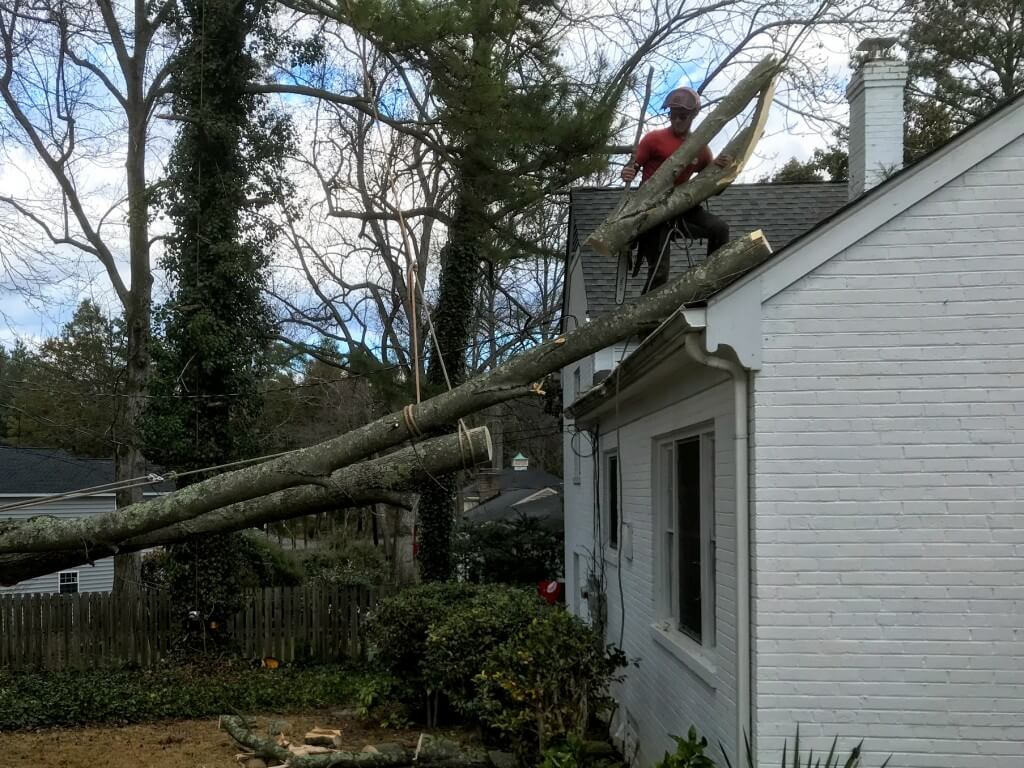 Emergency Tree Removal-Greenacres Tree Trimming and Tree Removal Services-We Offer Tree Trimming Services, Tree Removal, Tree Pruning, Tree Cutting, Residential and Commercial Tree Trimming Services, Storm Damage, Emergency Tree Removal, Land Clearing, Tree Companies, Tree Care Service, Stump Grinding, and we're the Best Tree Trimming Company Near You Guaranteed!