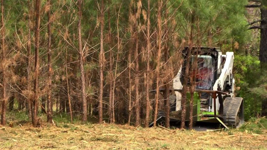 Land Clearing-Greenacres Tree Trimming and Tree Removal Services-We Offer Tree Trimming Services, Tree Removal, Tree Pruning, Tree Cutting, Residential and Commercial Tree Trimming Services, Storm Damage, Emergency Tree Removal, Land Clearing, Tree Companies, Tree Care Service, Stump Grinding, and we're the Best Tree Trimming Company Near You Guaranteed!