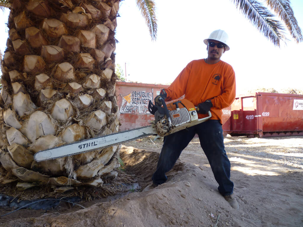 Palm Tree Removal-Greenacres Tree Trimming and Tree Removal Services-We Offer Tree Trimming Services, Tree Removal, Tree Pruning, Tree Cutting, Residential and Commercial Tree Trimming Services, Storm Damage, Emergency Tree Removal, Land Clearing, Tree Companies, Tree Care Service, Stump Grinding, and we're the Best Tree Trimming Company Near You Guaranteed!