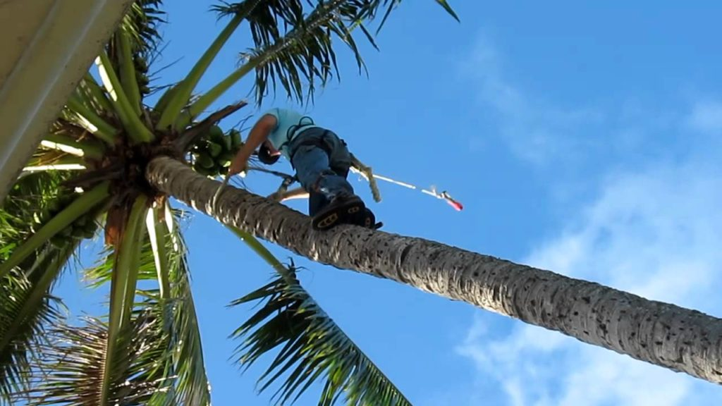 Palm Tree Trimming-Greenacres Tree Trimming and Tree Removal Services-We Offer Tree Trimming Services, Tree Removal, Tree Pruning, Tree Cutting, Residential and Commercial Tree Trimming Services, Storm Damage, Emergency Tree Removal, Land Clearing, Tree Companies, Tree Care Service, Stump Grinding, and we're the Best Tree Trimming Company Near You Guaranteed!