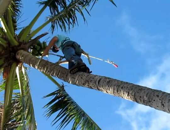Palm Tree Trimming & Palm Tree Removal Services-Greenacres Tree Trimming and Tree Removal Services-We Offer Tree Trimming Services, Tree Removal, Tree Pruning, Tree Cutting, Residential and Commercial Tree Trimming Services, Storm Damage, Emergency Tree Removal, Land Clearing, Tree Companies, Tree Care Service, Stump Grinding, and we're the Best Tree Trimming Company Near You Guaranteed!
