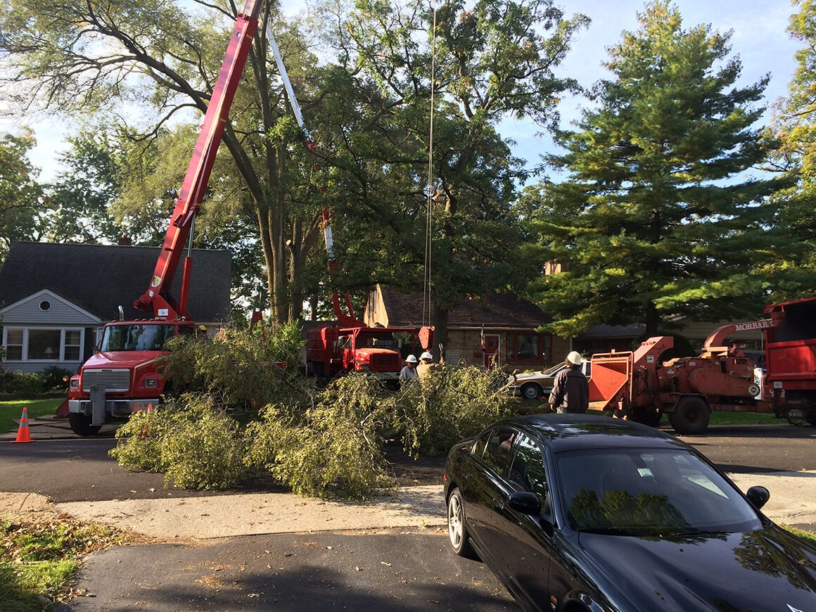 Residential Tree Services-Greenacres Tree Trimming and Tree Removal Services-We Offer Tree Trimming Services, Tree Removal, Tree Pruning, Tree Cutting, Residential and Commercial Tree Trimming Services, Storm Damage, Emergency Tree Removal, Land Clearing, Tree Companies, Tree Care Service, Stump Grinding, and we're the Best Tree Trimming Company Near You Guaranteed!