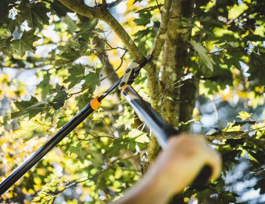 Tree Pruning-Greenacres Tree Trimming and Tree Removal Services-We Offer Tree Trimming Services, Tree Removal, Tree Pruning, Tree Cutting, Residential and Commercial Tree Trimming Services, Storm Damage, Emergency Tree Removal, Land Clearing, Tree Companies, Tree Care Service, Stump Grinding, and we're the Best Tree Trimming Company Near You Guaranteed!
