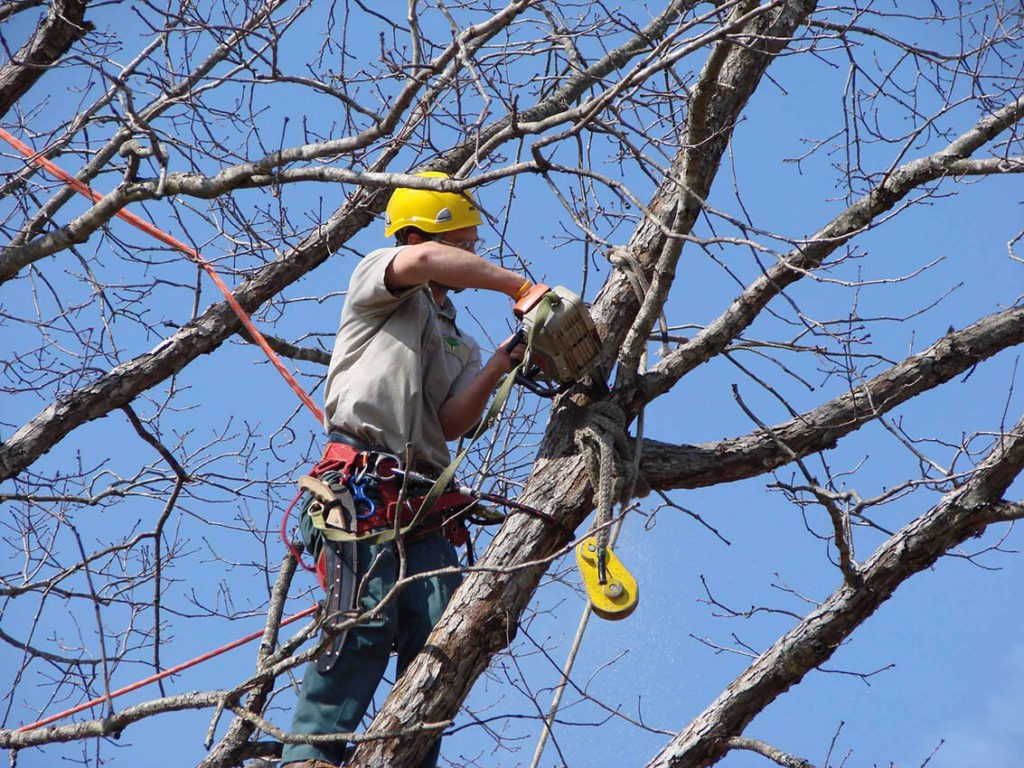 Tree Trimming copy-Greenacres Tree Trimming and Tree Removal Services-We Offer Tree Trimming Services, Tree Removal, Tree Pruning, Tree Cutting, Residential and Commercial Tree Trimming Services, Storm Damage, Emergency Tree Removal, Land Clearing, Tree Companies, Tree Care Service, Stump Grinding, and we're the Best Tree Trimming Company Near You Guaranteed!