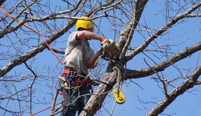 Tree Trimming Services-Greenacres Tree Trimming and Tree Removal Services-We Offer Tree Trimming Services, Tree Removal, Tree Pruning, Tree Cutting, Residential and Commercial Tree Trimming Services, Storm Damage, Emergency Tree Removal, Land Clearing, Tree Companies, Tree Care Service, Stump Grinding, and we're the Best Tree Trimming Company Near You Guaranteed!